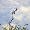 Au 2881 Rainbow Bee-eater