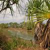 Au 2368 Keep River NP, Cockatoo Lagoon met Pandanus spiralis
