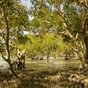 Au 2068 Broome, mangrovebos