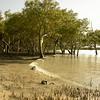 Au 2066 Broome, mangrovebos