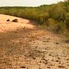 Au 2054 Broome, mangrovebos