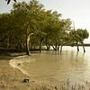 Au 2065 Broome, mangrovebos