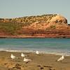 Au 1718 Silver Gulls voor Red Bluff