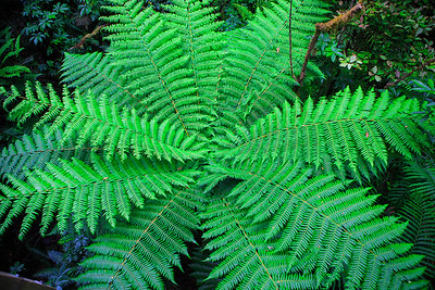 Fern in Rain Forest