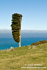 Wind shaped tree on Akaroa hilltop (portrait)