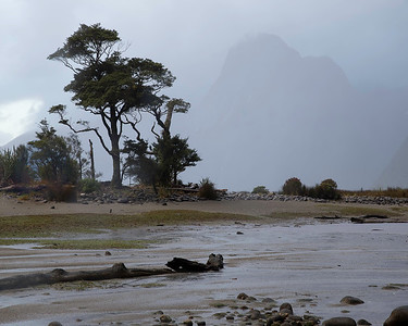 A foggy morning on the beach at Milford Sound