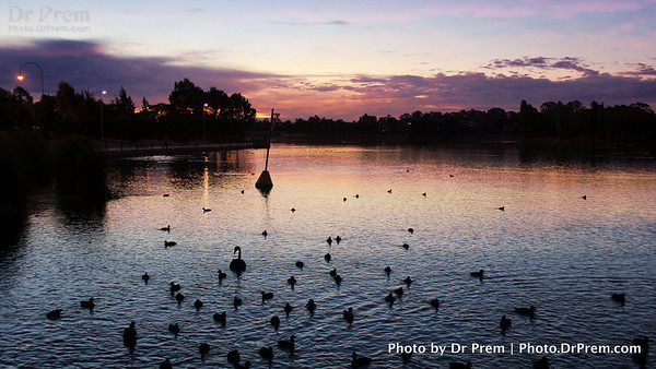 Serenity As The Sun Sets--Canberra And Its Duck Tales