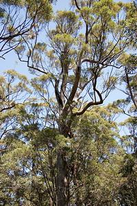 The Tree Top Walk Near Walpole
