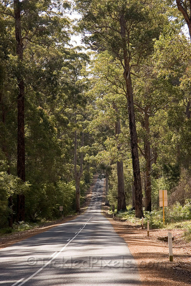 Road to Manjimup