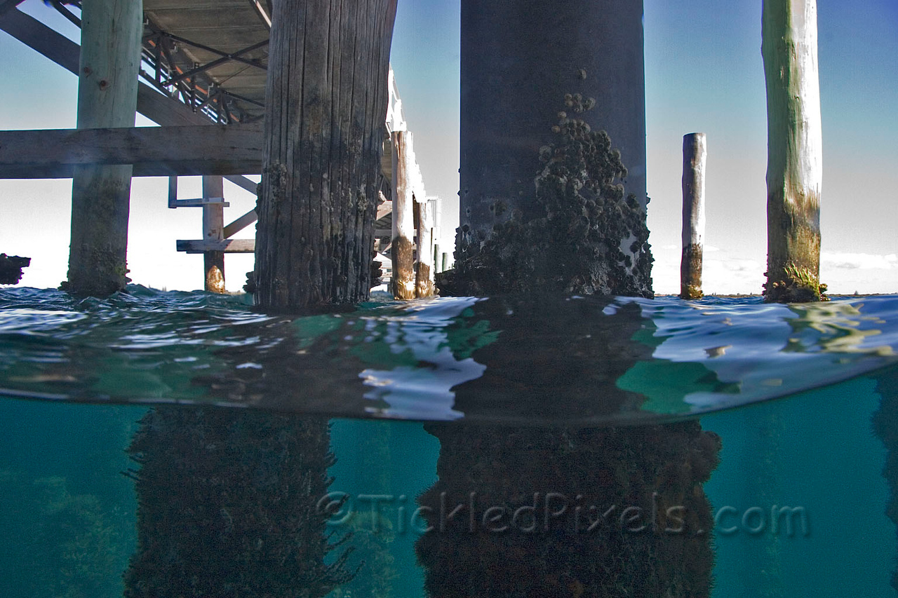Over and Under - Busselton Jetty