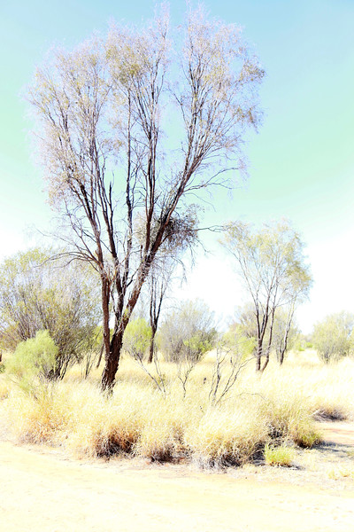 My Watercolor Tree
