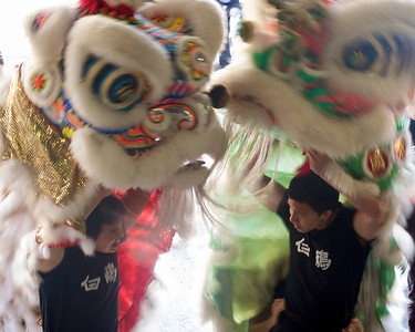 Lion Dance in Sydney Chinatown