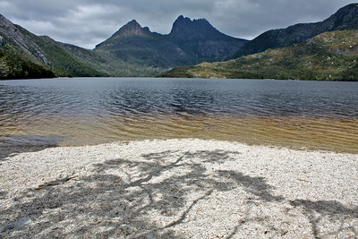 Tree shadow at Dove Lake