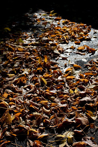 Autumn Leaves. Wangaratta.