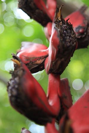Kwiatki w ogrodzie botanicznym