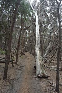 Brzydki las