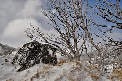 Alpine Country, NSW