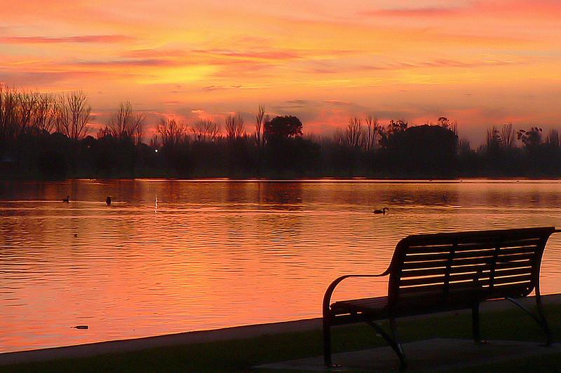Black Swans on Albert Park Lake 7. Looking west