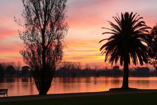 Black Swans on Albert Park Lake 6. Looking west