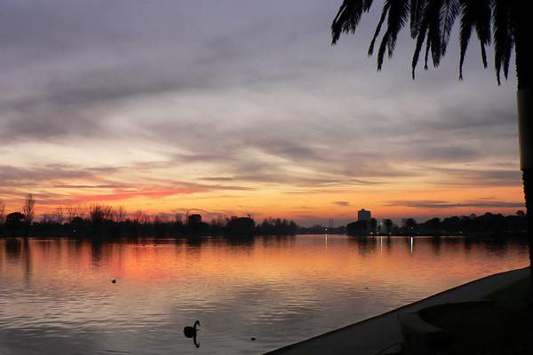 Black Swans on Albert Park Lake 3. Looking west