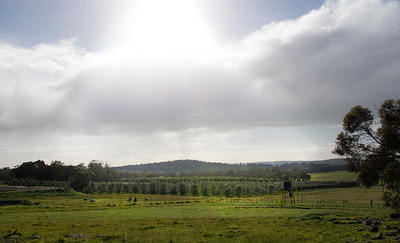The olive orchard - view from Wandering