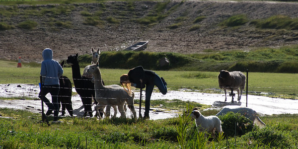 Sarah & Sarah feeding the Alpacass