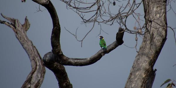 """""""28"""" parrot in Wandering"""