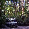 Our tour truck in the Pile Valley, Fraser Island.