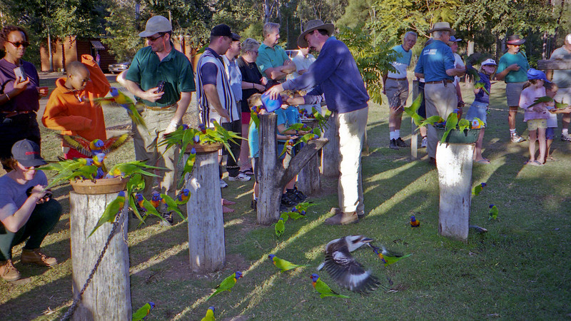 The bird feeding at the Cania Gorge caravan park.