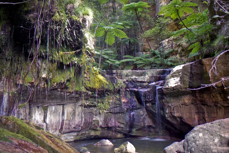The Moss Garden in Carnavan Gorge.
