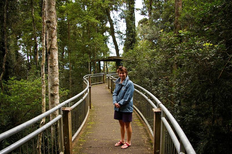 Robyn at walk in Dorrigo National Park