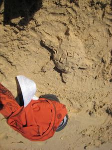 My Sand Turtle!