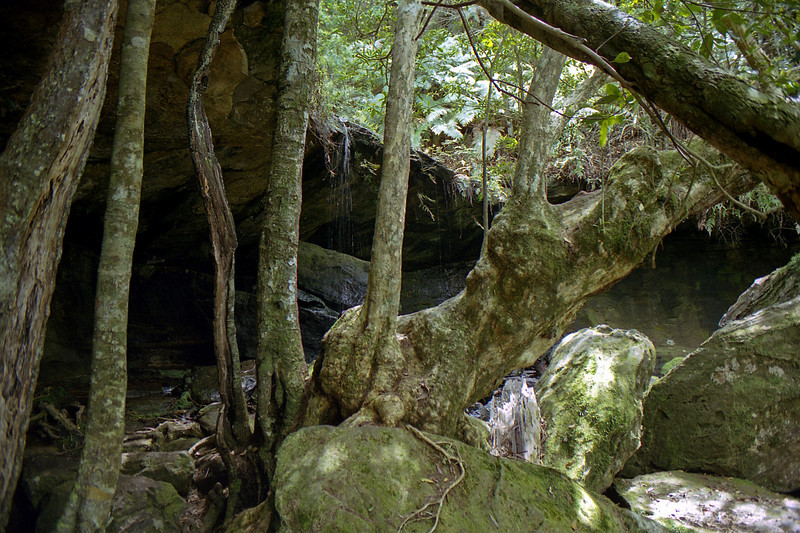 Bush on one of the walks in the Blue Mountains.