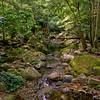 Minnamurra Creek.