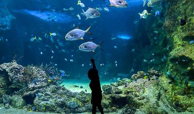Happy kid observing fishes at a large aquarium