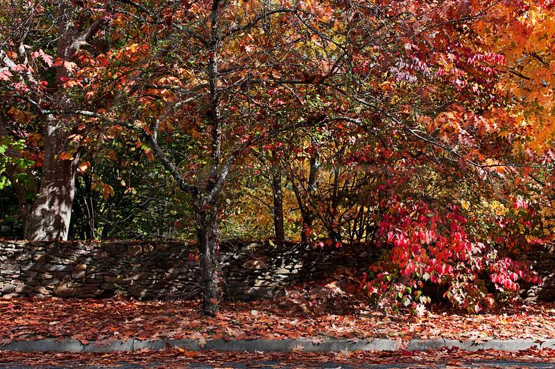 AULA1000 Bright Autumn