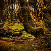 AULA0400 Mystical Forest