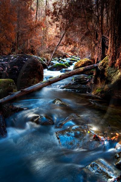 Taggerty River Victoria Last Light