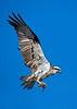 _KEE2159B_Osprey_210x297_Kee