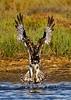 _KEE1039C_Osprey_DarkenWhites_210x297_Kee