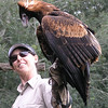 """Wedge tailed eagle and handler. <a href=""""http://en.wikipedia.org/wiki/Wedge-tailed_Eagle"""">http://en.wikipedia.org/wiki/Wedge-tailed_Eagle</a>"""