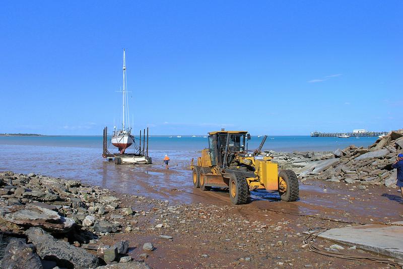 Velella begins to come ashore