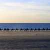 Tourists on camels - late afternoon