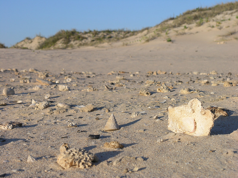 Coral and shell graveyard behind the first line of dunes