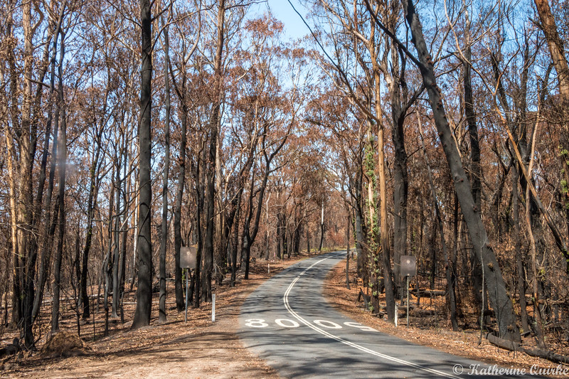 After the Bushfire
