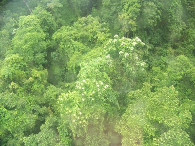 rainforest, as seen from skyrail