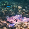 Coral and Fish - Great Barrier Reef