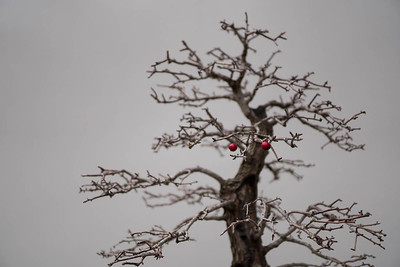 Two Red Dots and a Bonsai