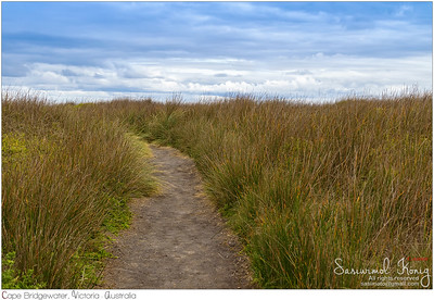 Walking path across tall button grass .. no snake coz I didn't see one :P