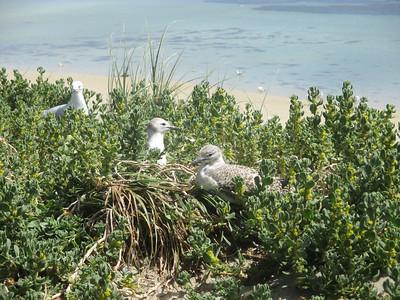 penguin island birds